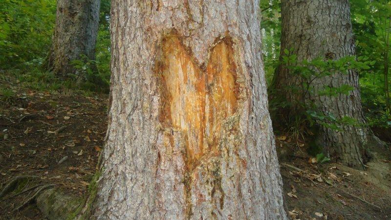 Inimă de lemn
